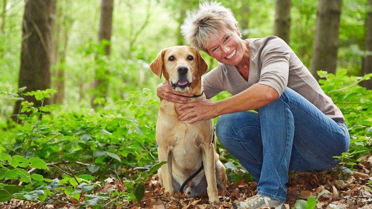 犬の免疫力が下がる4つの原因と家庭でできる対策