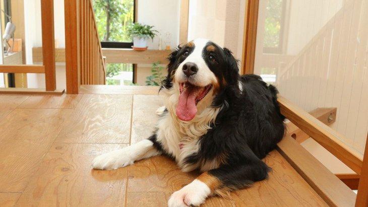 大型犬を室内飼いするときに必要な注意4つ