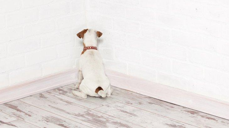 犬に「体罰」を行ってはいけない4つの理由