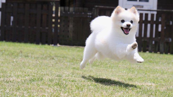 犬の腰や関節がポキポキ鳴る理由