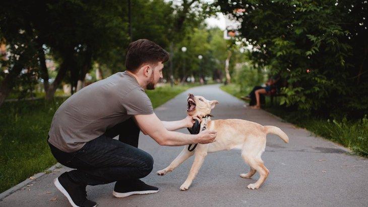 問題行動がある犬は若くして死亡する率が高いというイギリスの研究結果