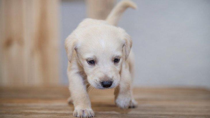 犬にとって『居心地が悪い場所』5選