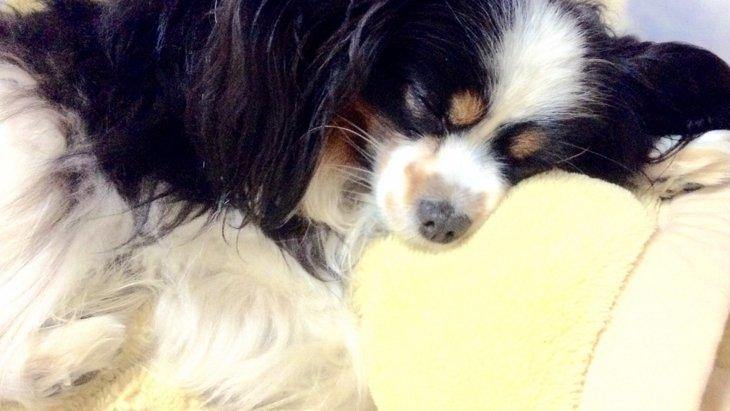 犬が「寝室好き」な7つの理由
