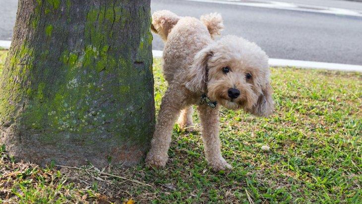 犬がオシッコのあとによくする行動