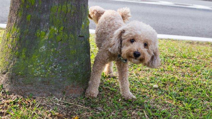 犬がオシッコのあとによくする行動3つ