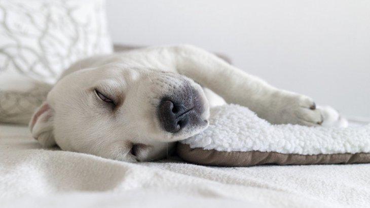 犬が寝ている時に白目を剥くのは問題ない?