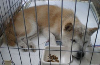 住宅街を放浪して保護された老犬。初めての介護から感じたこと