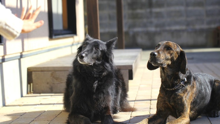 犬と信頼関係を築くための心得4つ