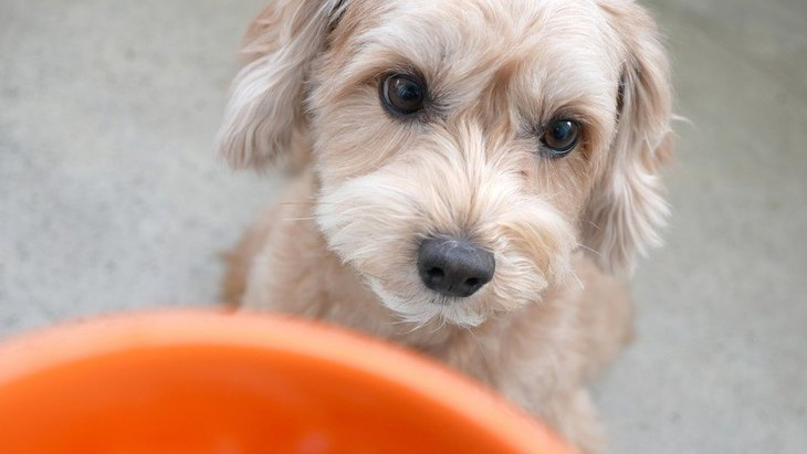 犬に絶対与えてはいけない『夏の野菜』4選!食べてしまった時の対処法は?