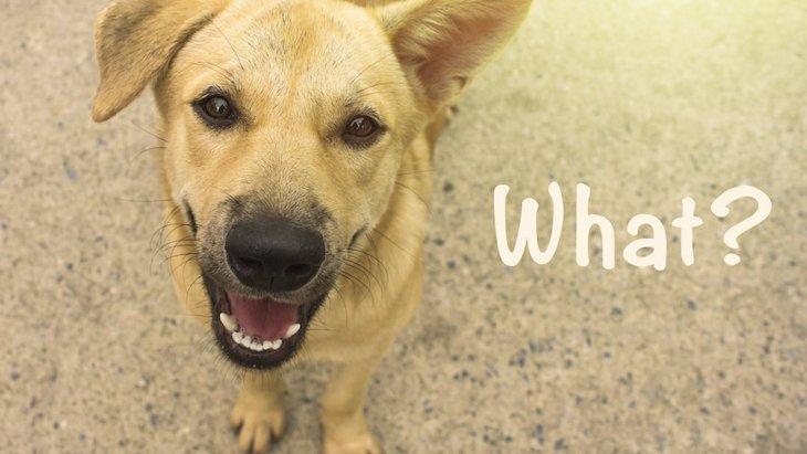 犬に『言葉』を覚えてもらうための方法4つ