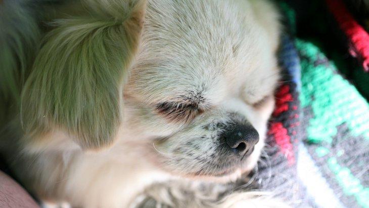 愛犬の7歳はシニア期!寝たきりにならない為に見直す点とは?