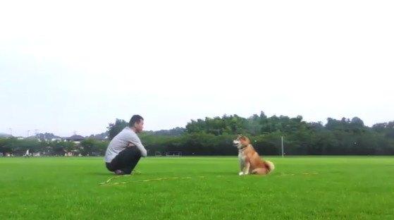 柴犬まるちゃんの哀愁漂うキャッチボールが話題!