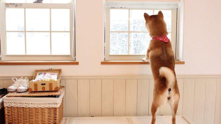 つい見落としがち!犬に適していないNG生活環境4選