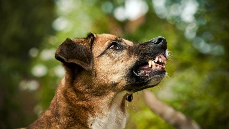気をつけて!犬が怒っている時の表情や仕草6つ