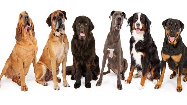 犬のサイズと体型が骨肉腫のリスクに関連しているという研究結果