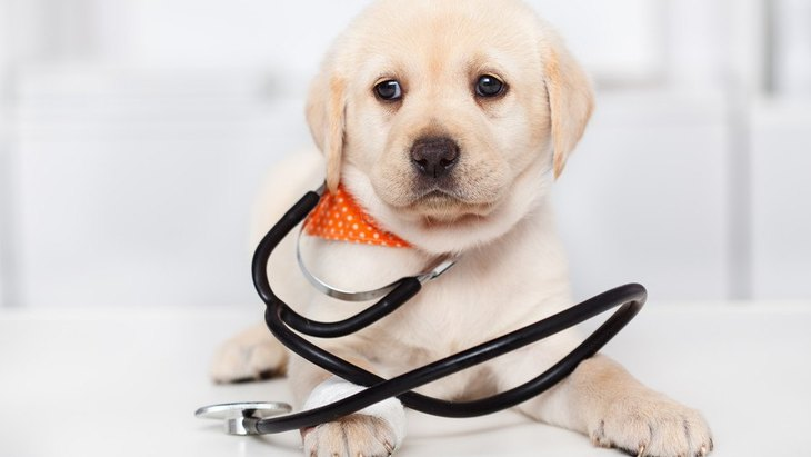 必ずチェックして!子犬が死亡しやすい『危険な病気』4選
