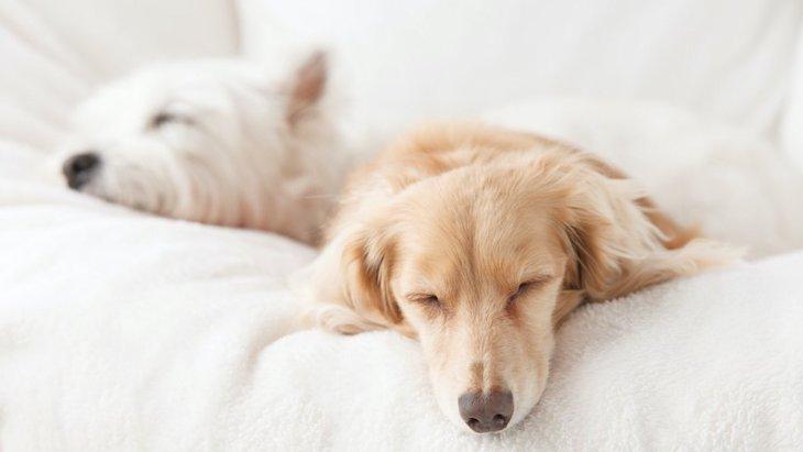 犬の適切な睡眠時間は?飼い主ができる睡眠の質向上対策まで