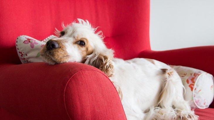 愛犬の「いつもと違う」は見逃さないで!病気を疑う8つの変化