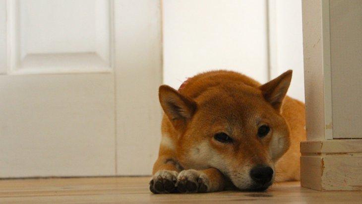 犬が体調を崩しやすくなる3つの生活習慣
