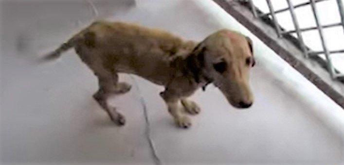 皮膚の感染症にかかった犬をレスキュー。命の危機から奇跡の回復!