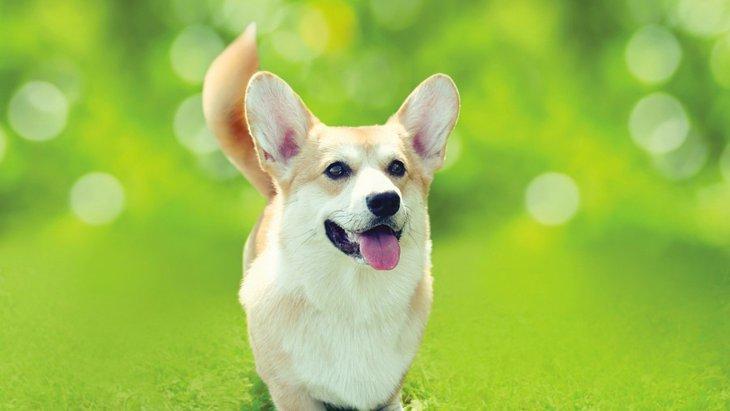 犬に最適な温度と湿度について。人間の感覚で管理すると危険かも?