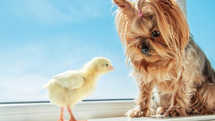 犬と小動物は一緒に暮らせる?トラブルを防ぐ対策