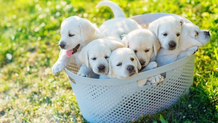 子犬と成犬の体の違い3つ