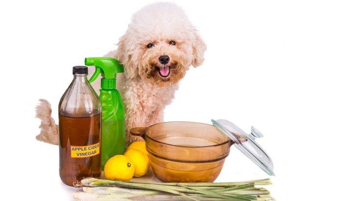 犬に酢を与えても大丈夫?しつけに活用する方法、成分や健康効果について