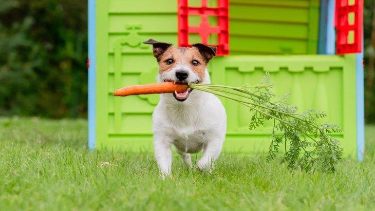 犬が食べたらNGな夏野菜5選