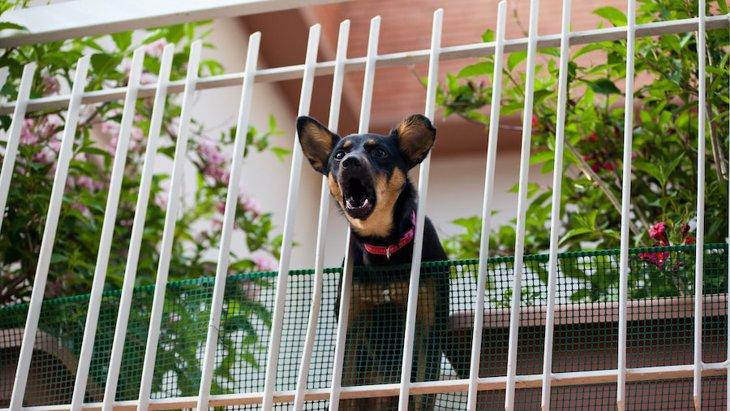 犬が来客時に吠えてしまう心理2選!やめさせるための対策は?