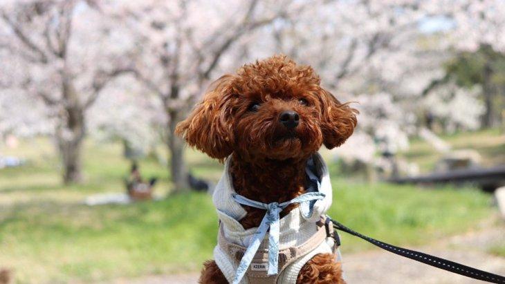 LAYLAのわんちゃん占い!【4/20~4/26】の運勢