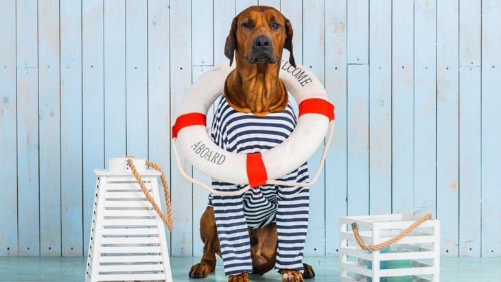 愛犬と一緒に船旅はいかが?ペット同伴可の国内フェリーまとめ