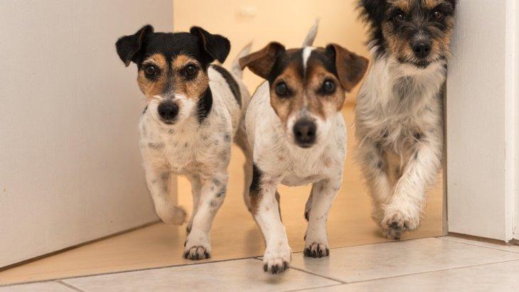 犬を多頭飼いしているときのお留守番で注意したい2つのこと