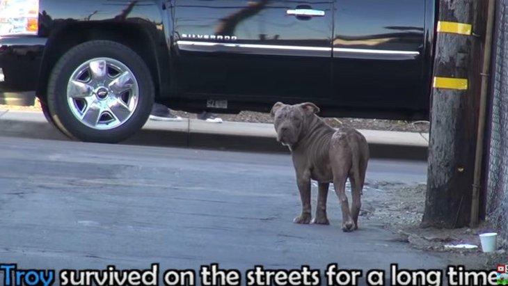 ひどい感染症で衰弱しきった犬の保護。回復後の表情がまるで別犬!