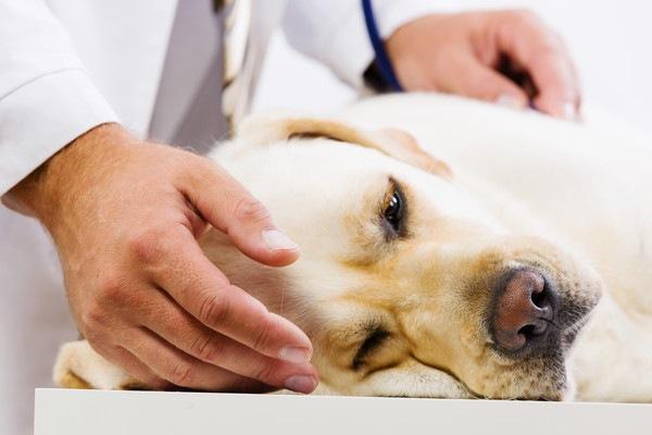 犬の消化不良の症状や原因と対処法