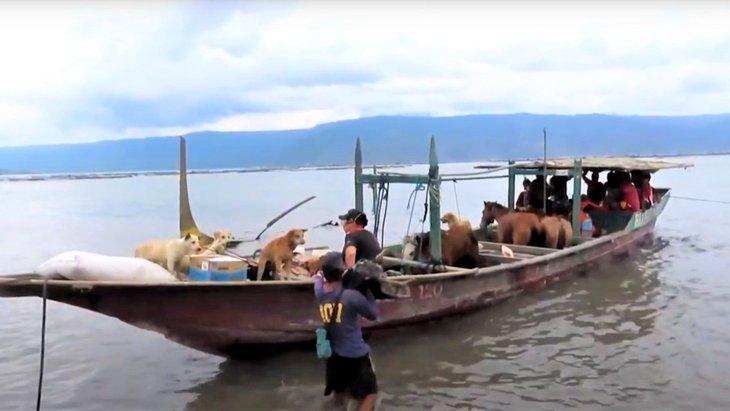ノアの箱舟。フィリピンの火山噴火で残された犬たちをレスキュー!