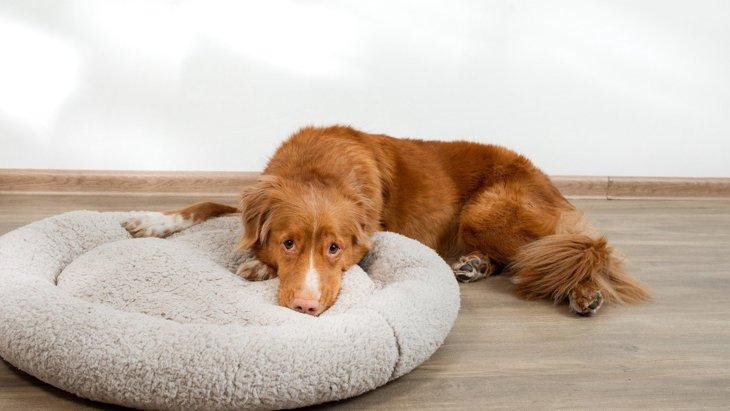 犬が怯えてしまう『飼い主のNG行為』5選