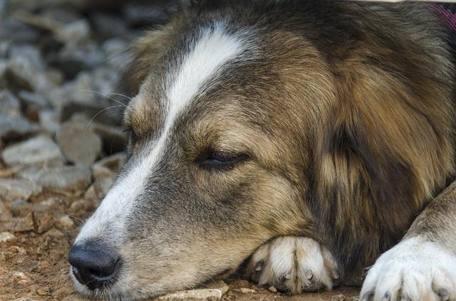 犬のアレルギー検査の方法やその費用・必要性について