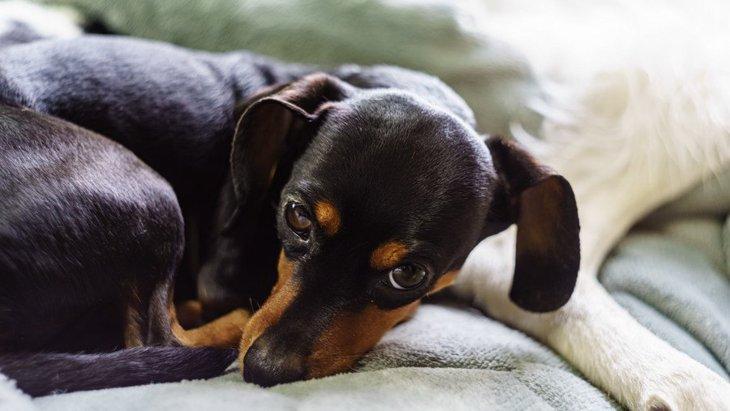 犬が『困っている時』によくする仕草や行動4選