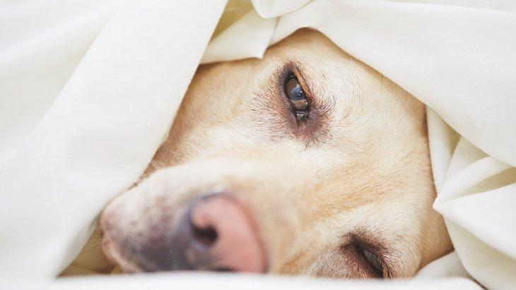 てんかんを抱える犬との暮らしで注意したいこと5つ