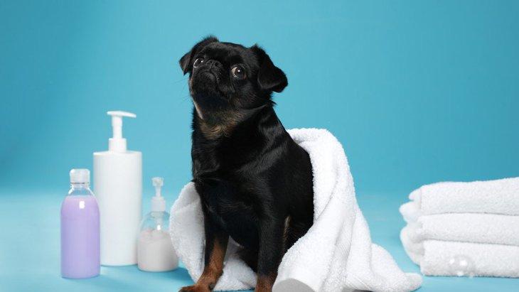 犬がお風呂に行きたがらない!嫌がってしまう8つの原因と対処法とは