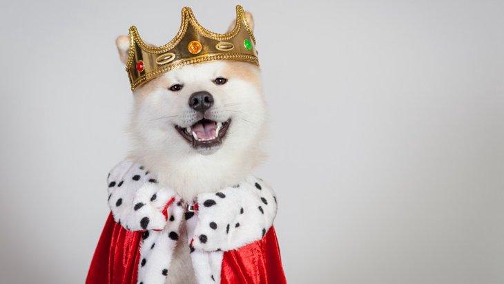 貴族・王族と暮らしていた犬種4選