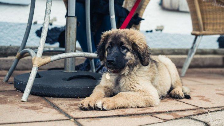 福岡県の犬と一緒に行けるオシャレカフェ4選