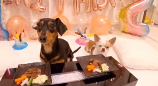 幸せいっぱいな愛犬の誕生日会…のはずが、修羅場に!ワンちゃんたちの激しい争奪戦