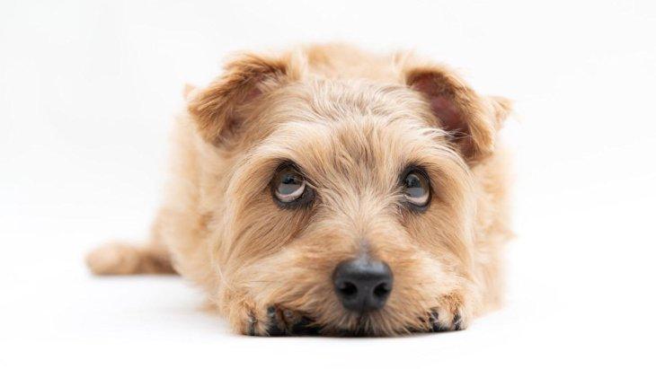 犬が「インターホン」でほえる理由と3つの対応方法