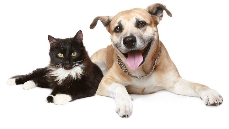 保護犬や保護猫に新しい家族を見つける決め手は写真映り!英国の調査から