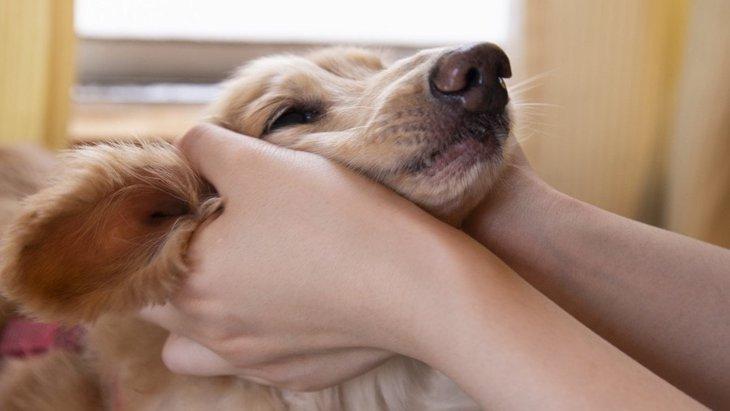 犬に『構いすぎてはいけない』理由3選!もしかしたら大きなストレスに繋がってるかも…?
