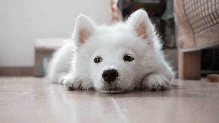 【これから子犬を飼う人へ】あなたには時間に余裕がありますか?