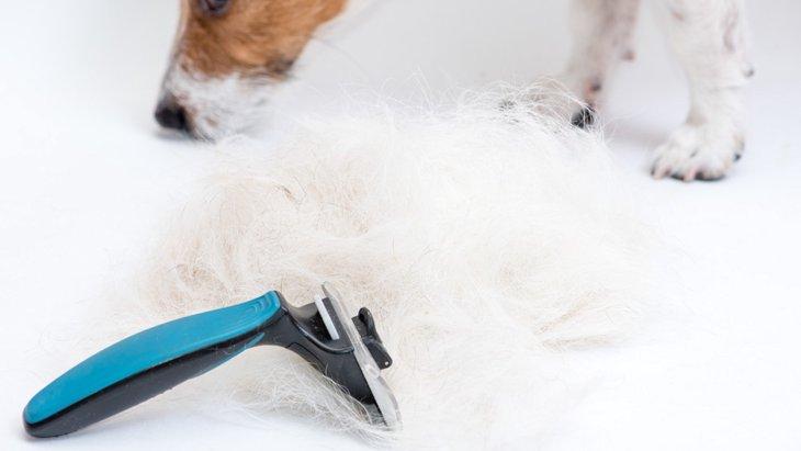 犬の換毛期に役立つとされる「ファーミネーター」の落とし穴