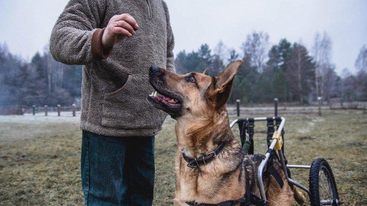 犬の歩行器の選び方やおすすめ商品、手作りする方法まで